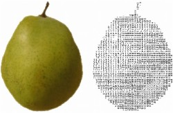 A fruit image classifier with Python and SimpleCV